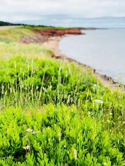flowers on beach PEI