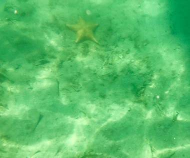 Starfish 7