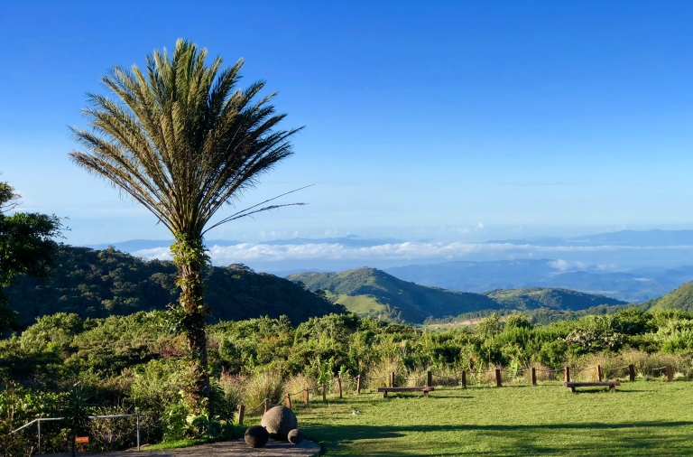 Monteverde view with tree