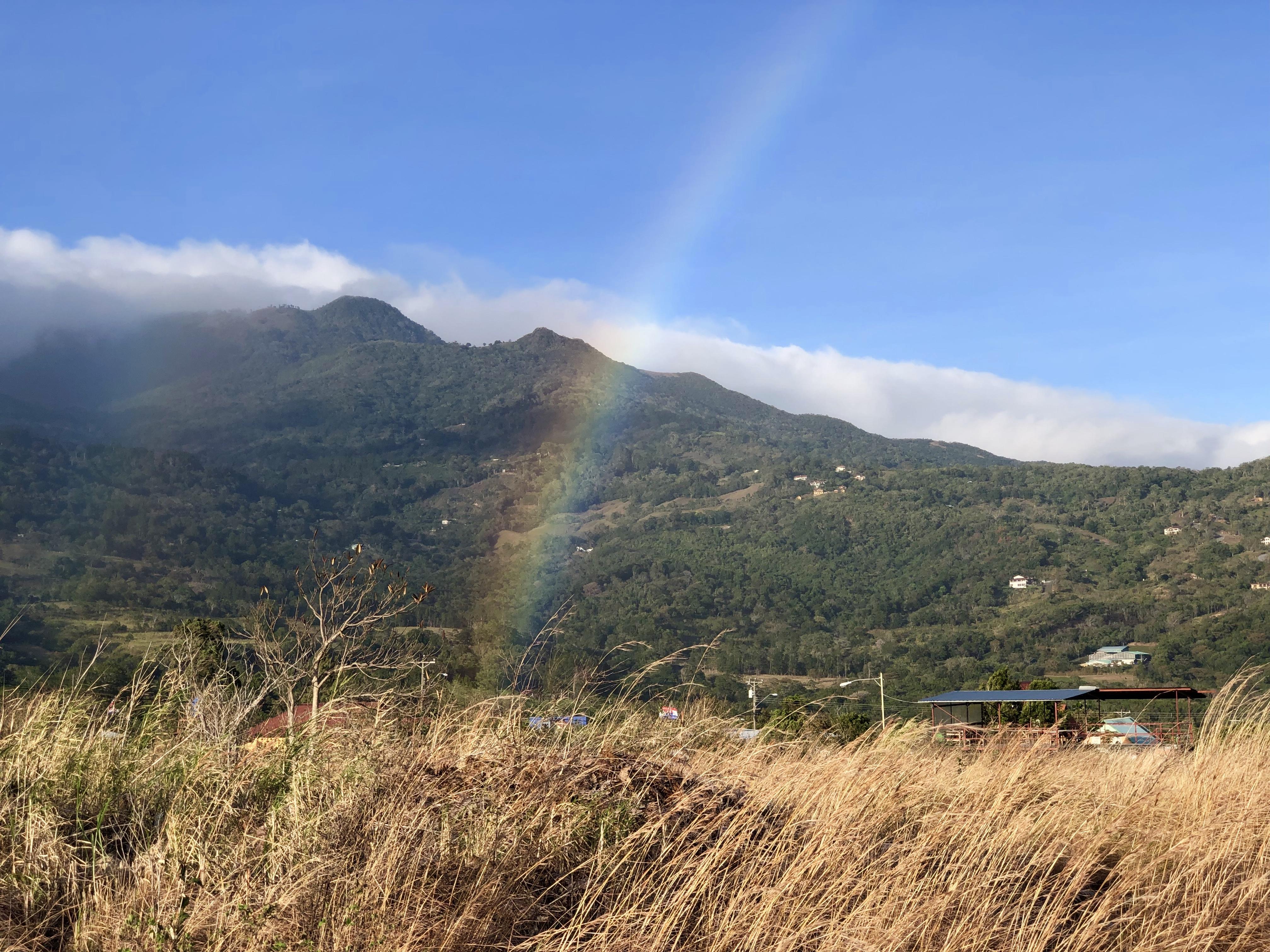 Panama rainbow 5